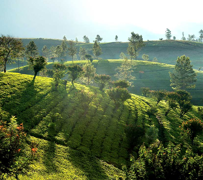 Tea growing locations of Dilmah Teamaker's Private Reserve